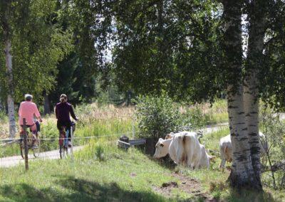 Cyklist m kor