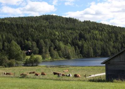 Kor o sjö
